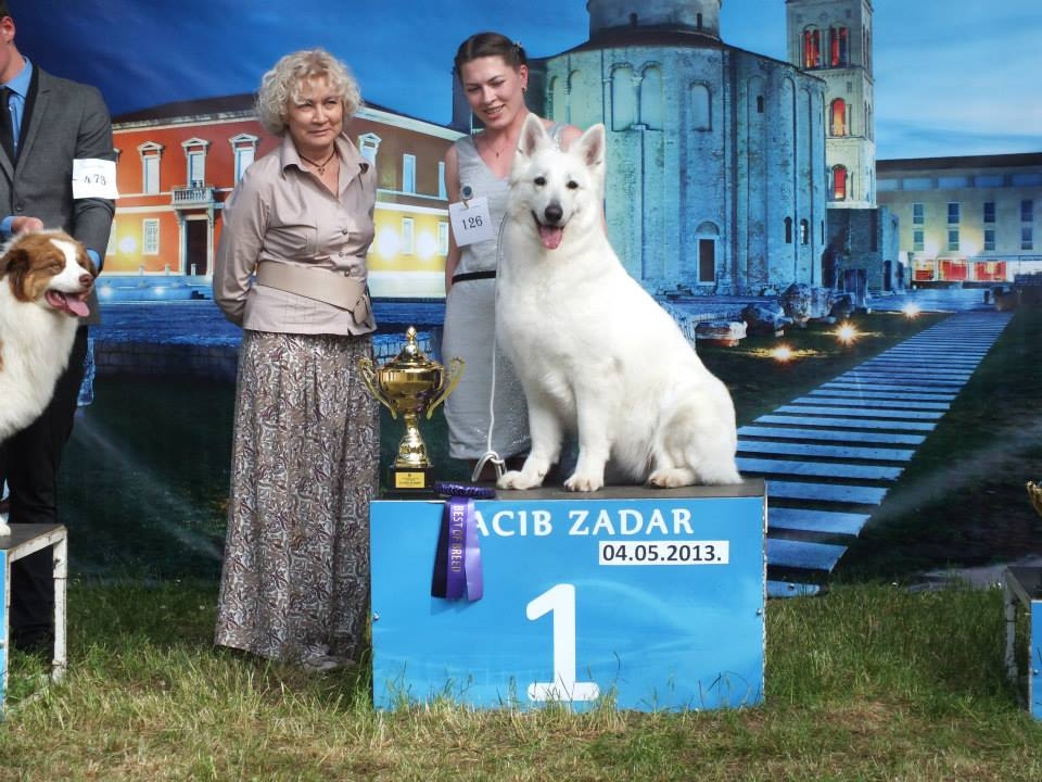 Baltic Beauty  Crystal Siberian Wolf Best in group - 1
