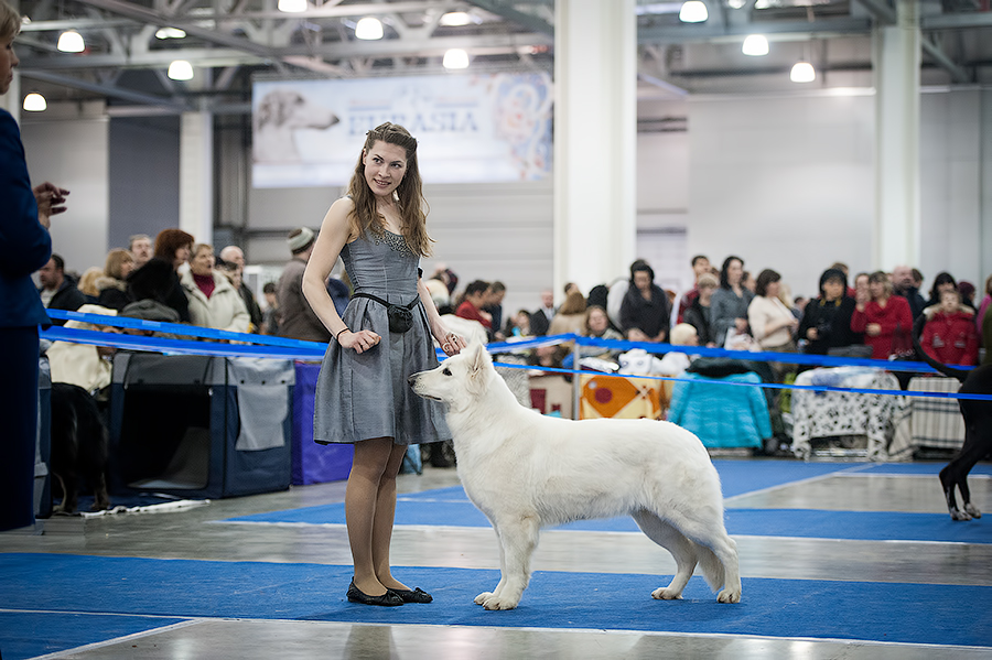 Baltic Beauty Crystal Siberian Wolf Eurasia Winner 2013