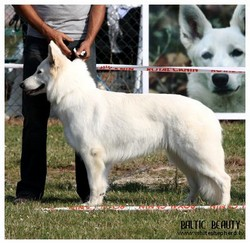 Champion class winner, female - Guanche of Luna Legacy